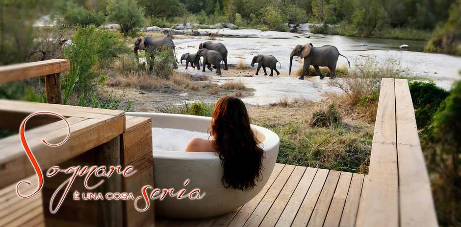 Elefanti - Sudafrica
